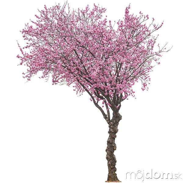 Stromy sú zdrojom energie