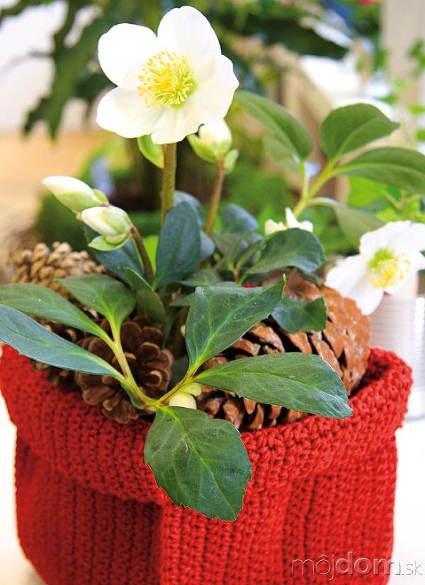 Vzime môžete záhradu obohatiť