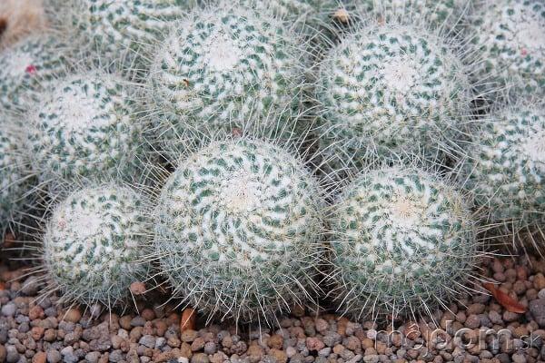 Ak hľadáte kaktus do
