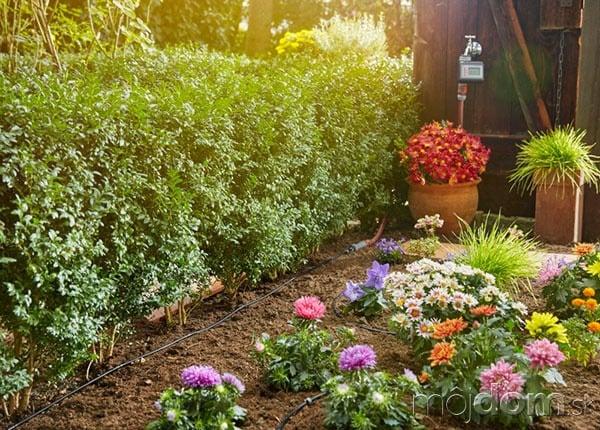 Mestské záhradníčky sú šik