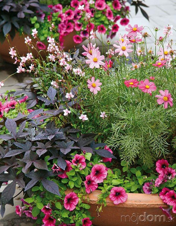Aby letničky ainé rastliny