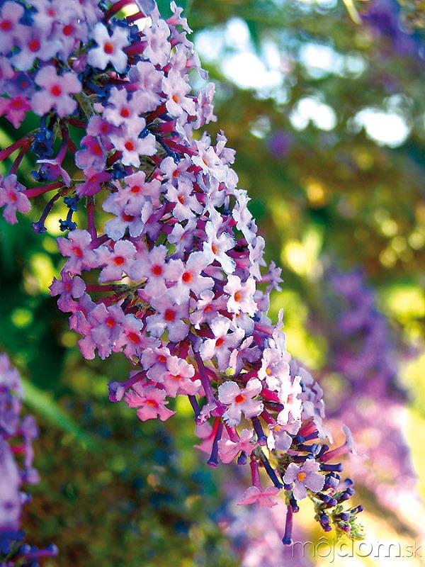 Aby bola vaša záhrada