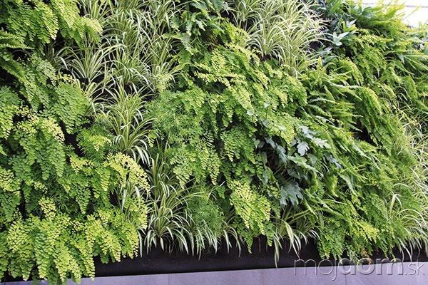 Rastliny možno pestovať aj