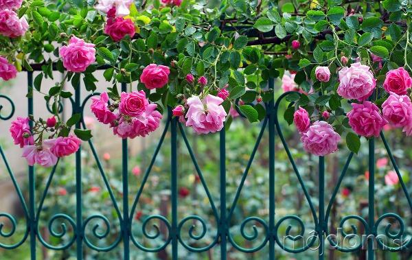 Romanticky pôsobiaci kovový plot