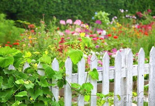 Vidiecku záhradu ohraničte klasickým