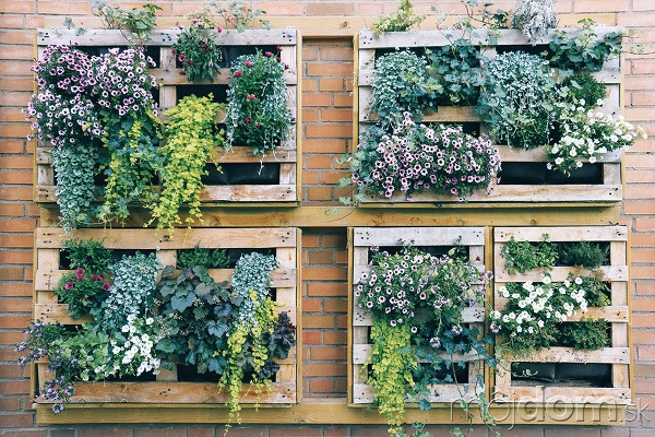 Rastliny, hlavne sezónneho charakteru,