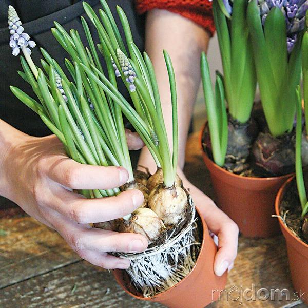 Jednotlivé rastliny vyberte zplastových