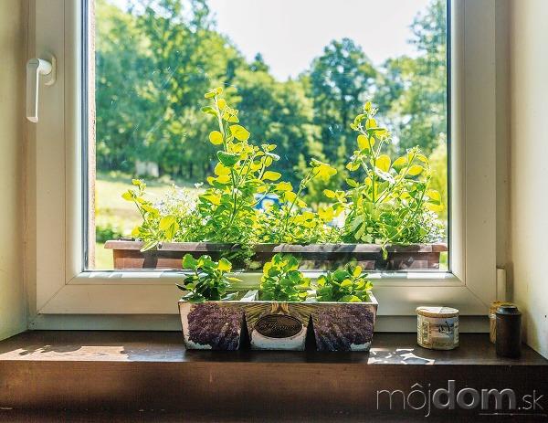 Okrasná záhrada abylinky sú