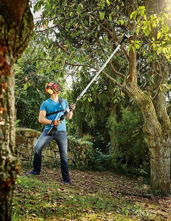 Ako skrotiť stromy a