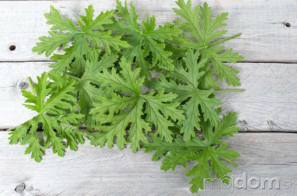 Rozvoňajte si byt bylinkami