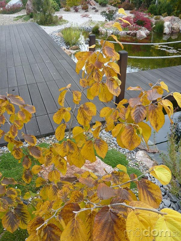 Dreviny, ktoré zaplavia záhradu