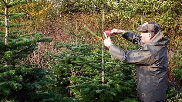 Inšpektori z Mountfieldu kontrolujú a značkujú vybrané stromčeky