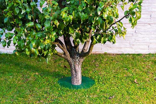 TreeGuard - Revolučná ochrana