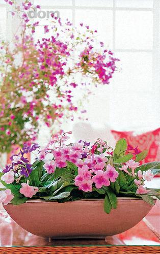 Kvety v črepníkoch