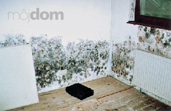 Как сделать чтобы стена не сырела