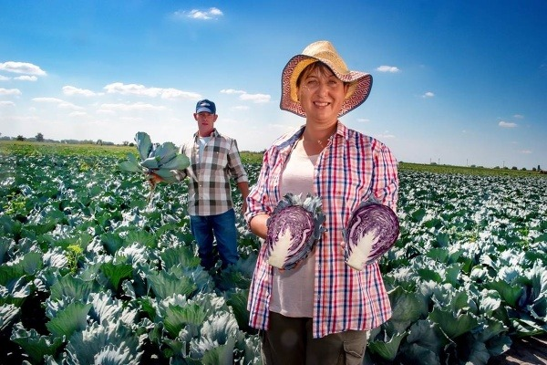 Zelenina z firmy VITA-ZEL