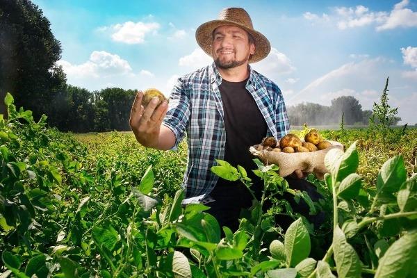 Zelenina zo Zeleninárskej spoločnosti