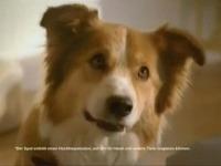 Či psíky na reklamu reagujú, nie je známe