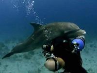 Delfín to skúša na človeka