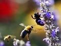 Dievča napadlo 50 včiel, dostalo anafylaktický šok