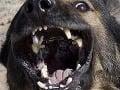 Vojaka (†31) zabili dva služobné psy: Mal ich ísť kŕmiť
