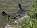 Utopených pribúda: Z Jaroveckého ramena vytiahli mŕtvu ženu (65)