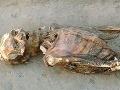 V múmiách našli parazitov, už ich má 200 miliónov ľudí!