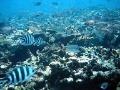 Oceány sú v šokujúcom stave, morský život vymiera