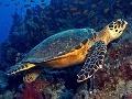Otrasný prípad: Na pláži našli korytnačku zabitú plastami!