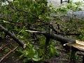Odlomený konár zo stromu padol na deti, 10 zranených