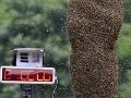 Farmár v trenkách mal na sebe 27 kíl včiel!