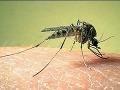 Zápal mozgu: Dievčatko (8) záhadne zomrelo po uštipnutí komára!