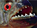 Panika v Poľsku: Z jazera, v ktorom sa kúpali deti, vylovili rybári krvilačné pirane!