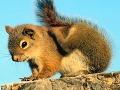 Za smrť chovateľov veveričiek sú zrejme zodpovední ich miláčikovia: Nosili v sebe vírus!