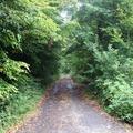Robin Hood sa už neschová, Sherwoodsky les redne rýchlo