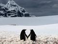 Najromantickejší obraz zimy: Párik tučniakov sa drží za ruky!