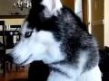 Nevídané: Na internete koluje VIDEO s hovoriacim psom!