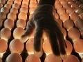 Nepríjemná správa pred Veľkou nocou: Cena vajec pôjde zrejme hore!