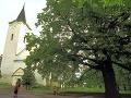 Slovenská lipa bojuje o titul najsympatickejšieho stromu roka v Európe: Hlasujte za ňu!