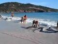 Senzácia na internete: Spontánna záchrana delfínov v raji!