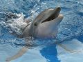 Švajčiarsko zakázalo chov delfínov v akváriách