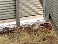 Školáčka (†11) ležala nahá v garáži: V kaluži krvi a na pokraji smrti!