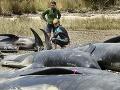 Záhada: Hromadný úhyn stoviek delfínov v Peru