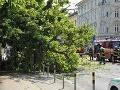 Strom vyvrátilo z prezidentskej záhrady, spadol na trolejové vedenie