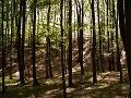 V lesoch okolo Moskvy bez stopy zmizlo už 25 hubárov
