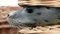 Za poškodenie ohrozených druhov budú hroziť sankcie