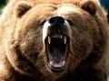 Kuriózny boj o život: Rus odohnal hladného medveďa počítačom!