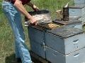 Včelárovi z Lipian niekto úmyselne podpálil úle: Škoda je takmer 3000 eur