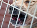 Z družstva v Hrišovciach ukradli päť strážnych psov