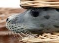 Poslanci chcú upraviť pravidlá obchodovania s tuleňmi